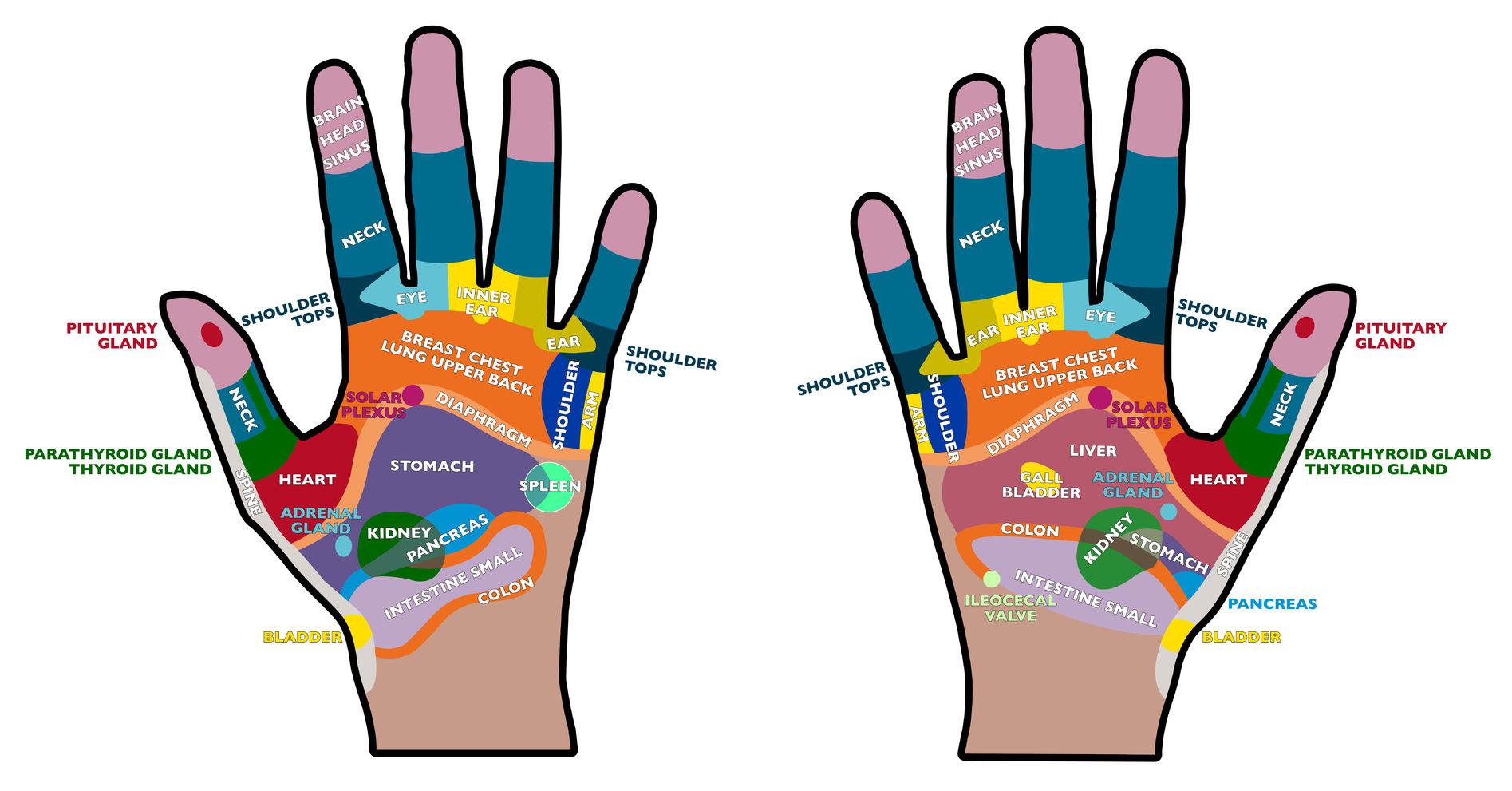 28551237-r-flexologie-poche-les-mains-les-paumes-la-sant-le-massage